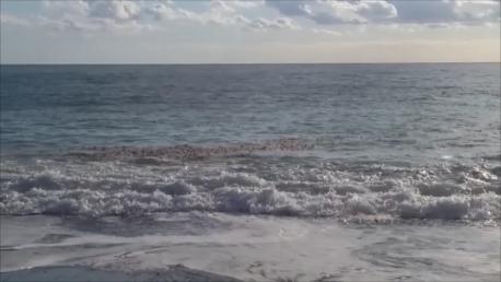 Assegnata la Bandiera Blu a Praia a Mare (Cs). Ma quali sono le reali condizioni del mare?