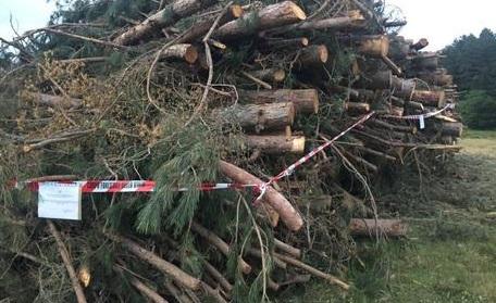 Longobucco (Cs) | Taglio alberi in Parco Sila in area non autorizzata, numerose denunce