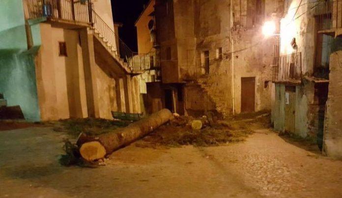 Verbicaro (Cs) | Lo strano caso dell'albero sconosciuto e il pericoloso libertinaggio della rete