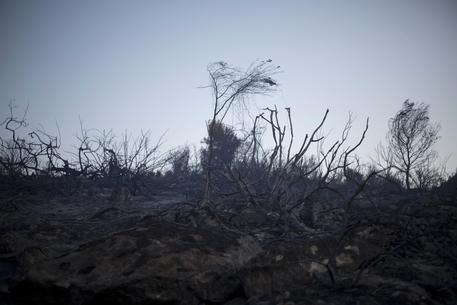 Calabria | Tenta di spegnere incendio nella sua proprietà, muore il pensionato Antonio Purita