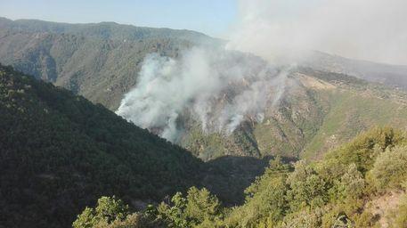 Incendio incenerisce 60 ettari di macchia nel Parco della Sila, denunciato presunto autore