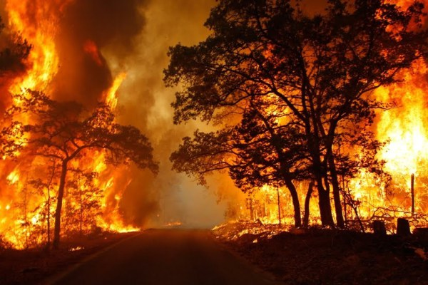 La grave denuncia di un giovane sugli incendi che stanno distruggendo la Sila