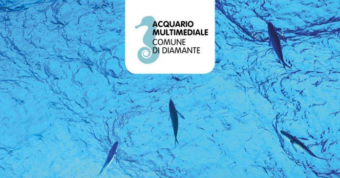 Diamante, Cauteruccio: «Si ritirino atti e comunicazioni per la gestione dell'Acquario Multimediale»