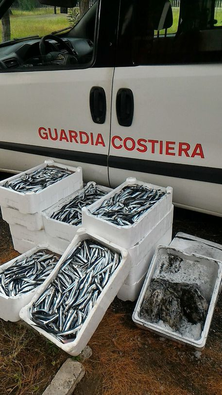 Palmi (RC), sequestrati 140 kg pescato non tracciato