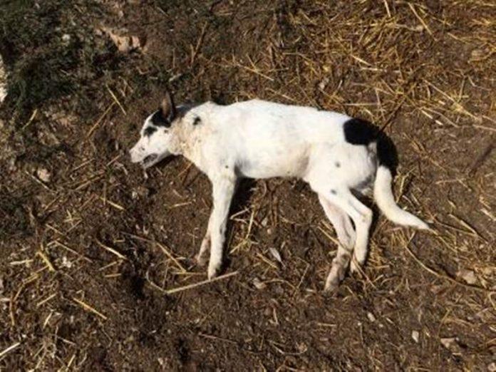 Raid a Mileto: ignoti feriscono mortalmente un cane con un colpo d'ascia