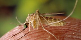 Malaria, Regione Basilicata avvia i primi controlli
