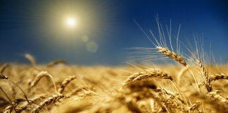 Santa Maria del Cedro, il 3 dicembre la presentazione del libro 'Come un campo di spighe di grano'