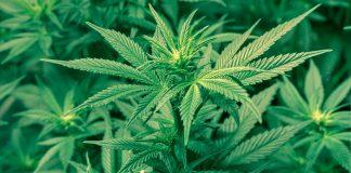 Rossano, marijuana nel divano di casa: arrestato dai carabinieri