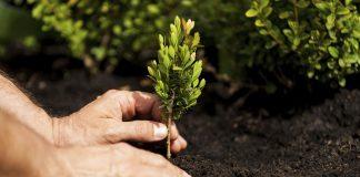 Scalea, amministrazione comunale e 5 Stelle insieme per piantare decine di alberi