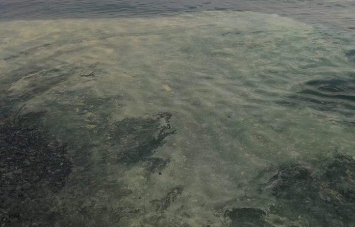 Stessa spiaggia, stesso mare: anche quest'anno quello del Tirreno è a chiazze