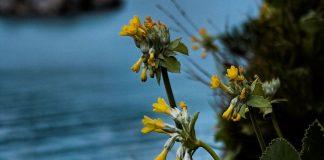 «La Regione Calabria renda operativa la legge per la protezione della flora spontanea»