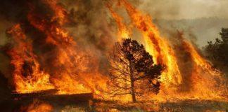 Parentela: «Regione Calabria approvi subito Piano antincendi, evitando il disastro del 2017»