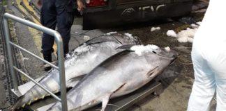Reggio Calabria, sequestrate 10 tonnellate di tonno rosso diretto in Spagna
