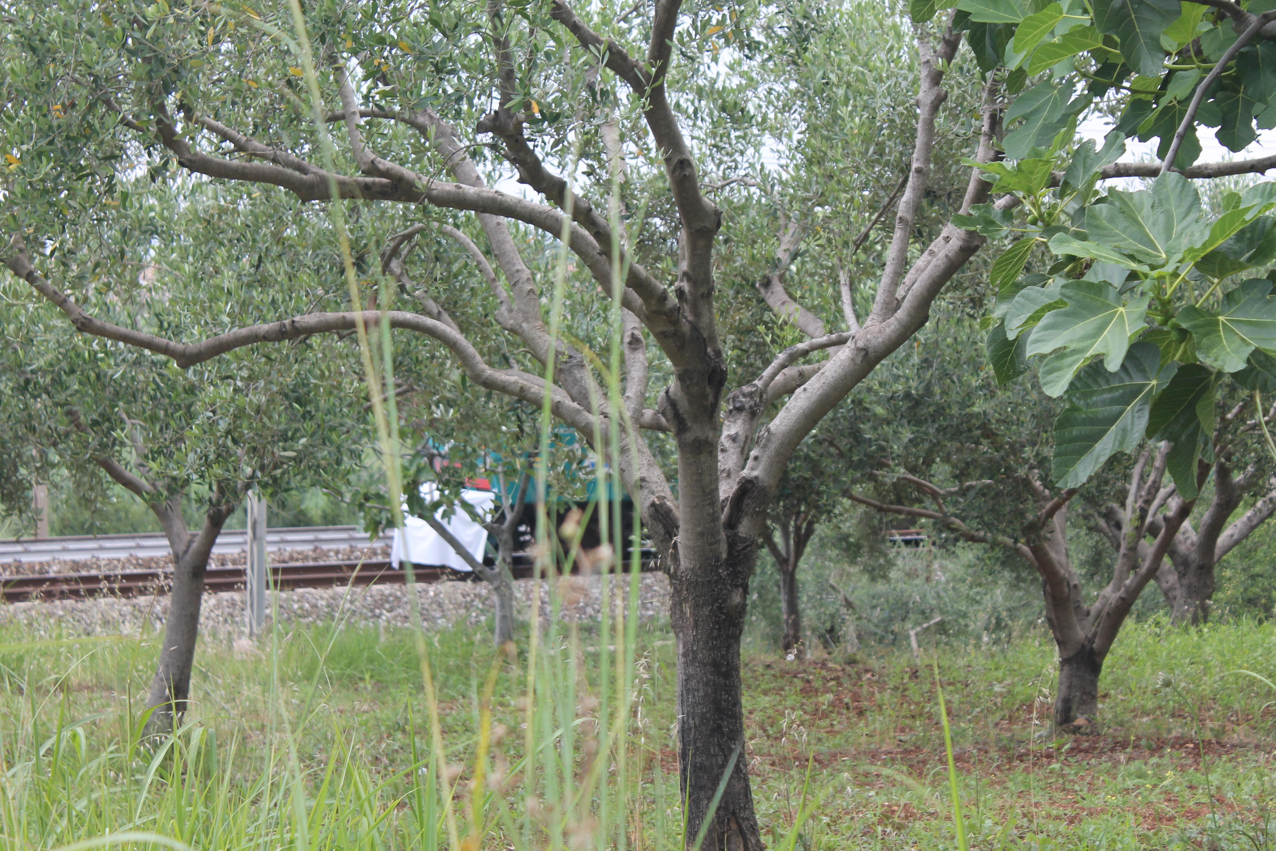 7e15d16574811 Tragico pomeriggio a Santa Maria del Cedro, treno investe una donna  morta