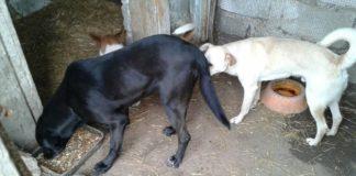 Randagismo e mattanza a Santa Maria del Cedro, privilegi per chi adotta i cani