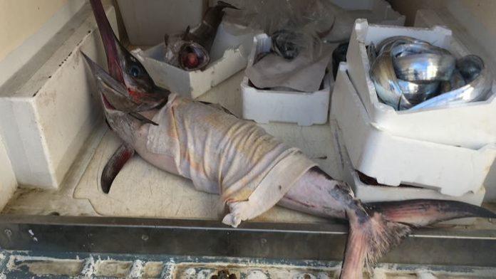 Pesce pescato senza autorizzazione, sequestrati 55 chili di prodotto ittico