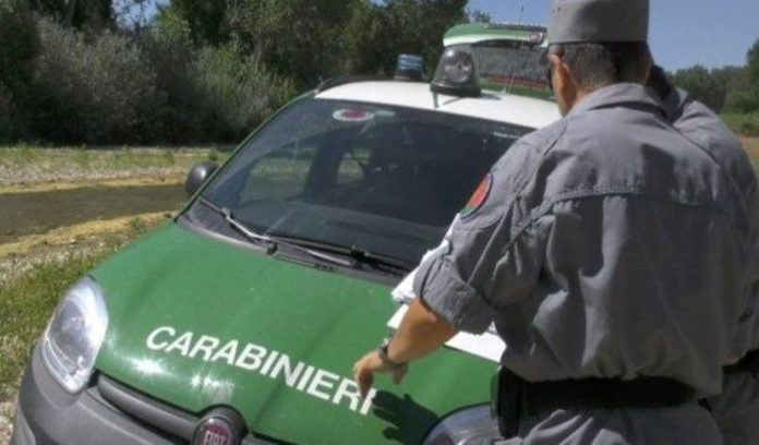 Amendolara, progetti di taglio boschivo irregolari: sequestrati 40 ettari di pineta