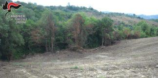 Voleva trasformare un bosco in area coltivabile ed estirpa macchia mediterranea