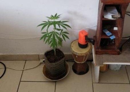 Ha una pianta di canapa come ornamento in salotto, un arresto nel Cosentino