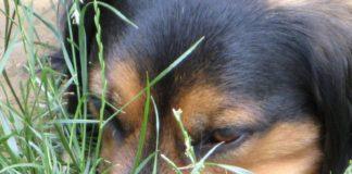 Lettere alla redazione: «Cani e veleni, troppe morti sospette a Marcellina»
