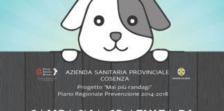 Asp Cosenza, il 3 ottobre via al progetto 'Mai più randagi'