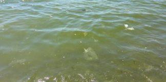 Mare sporco, on line la petizione 'Per un mare pulito a Scalea': apri il link per firmare