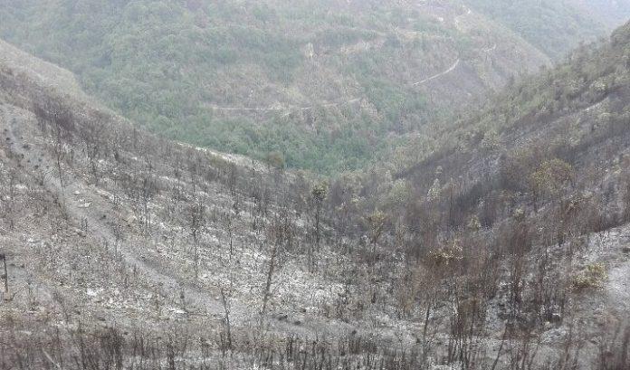 Tortora (Cs), gli incendi provocano una strage di animali - ATTENZIONE: IMMAGINI FORTI