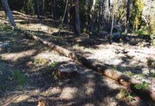 Consorzio di bonifica di Scalea: i difensori dell'ambiente che tagliano i boschi e quei fatti 'strani'